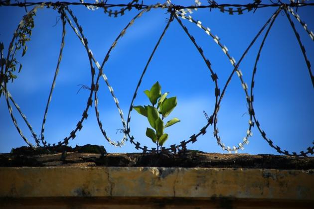 La drogue saisie à Genève finance la réinsertion des jeunes en Amérique  latine