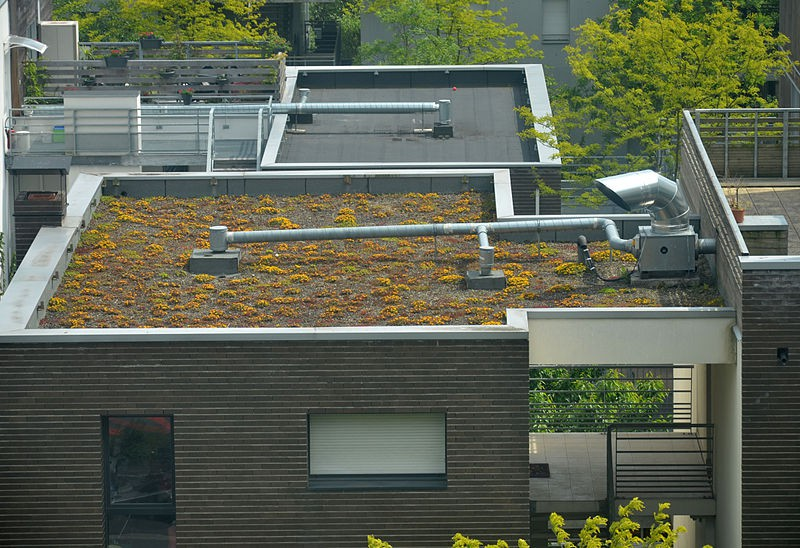 Une toiture végétalisée. DR