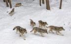 Les opposants à la loi sur la chasse dénoncent une loi ratée